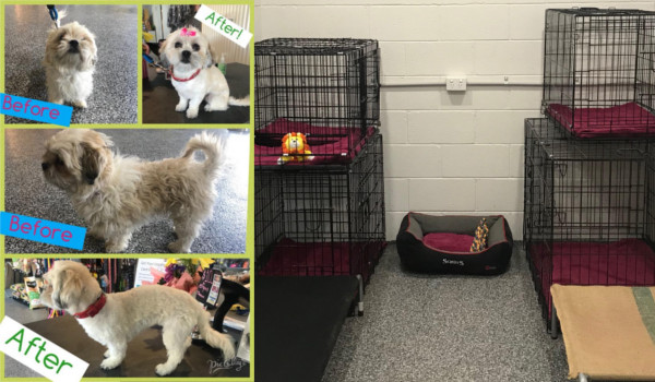 Before and after dog grooming in our air-conditioned dog salon.